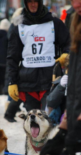 2010 Iditarod: Bored and ready to go!