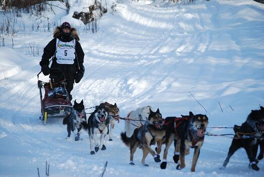 Jr. Iditarod - Guillermo Anton from Spain