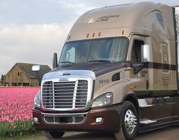 Brown Line truck in tulip field