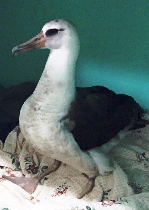 Albatross_5-18-16.jpg