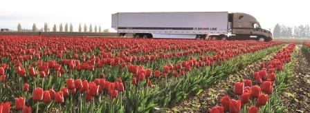Tulip field (red) with Brown Line truck.jpg
